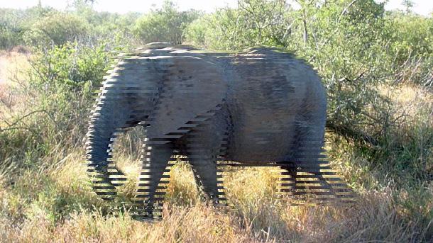 Elephant_1_interlaced